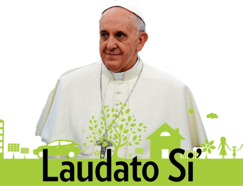 Laudato Si', 5 years on – A call for urgent action in response to ecological concerns